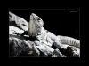 mexico-iguana-2sss